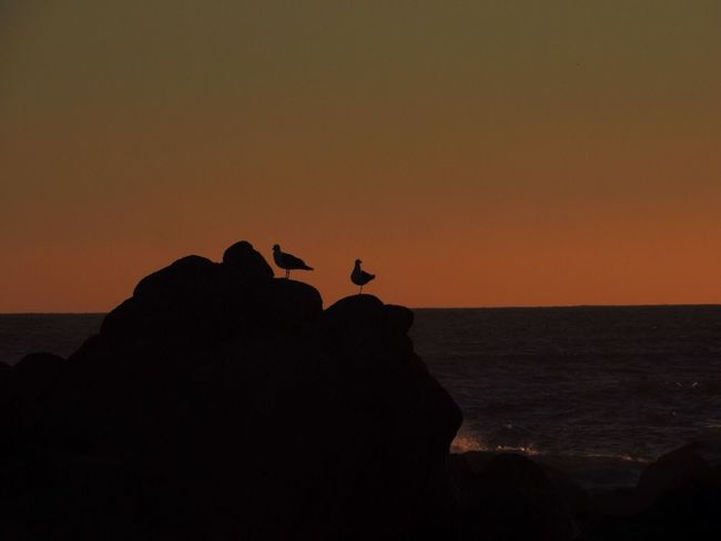 Sunset Sunset On The Rocks Sunset Silhouettes Birds At Sunset Orange Sunset Orange Sky Sunset Silhouette Animals In The Wild Horizon Over Sea Seagulls On The Rocks Seagulls And Orange Sky Nature Animal Wildlife Perching Enjoying The Sunset Beautiful Scenery From My Point Of View
