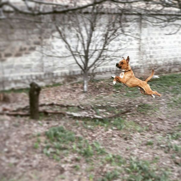 Dog Flying Superdog View Beauty Mydog Top Photo Of The Day Bestphoto Mustsee
