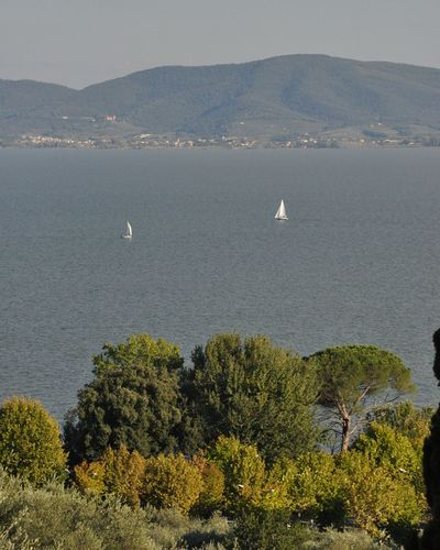 Growth Tree Outdoors Nature Agriculture Mountain No People Day Trasimenolake