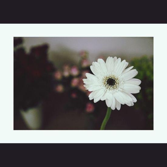 Tangkhanhphu Hoa Flower
