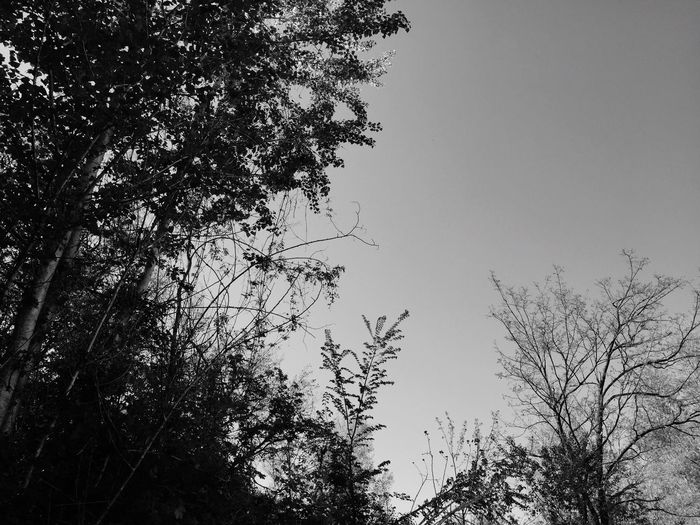 Blackandwhite Tree Sky Plant Low Angle View Nature No People Growth Day Group Of Animals Silhouette Animal Themes Bird Animals In The Wild Outdoors Tranquility Branch Animal Wildlife Beauty In Nature Animal Flying