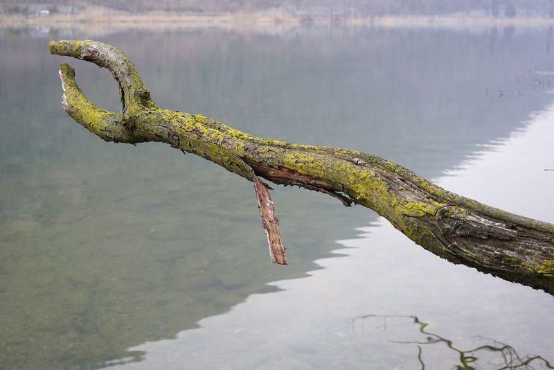 broken wood Sony Sel35f28z A7r2 Acqua Zeiss Italy Lake Segrino Sony Fe35f28z Tree Albero