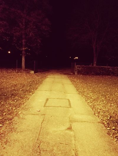 140. No People The Way Forward Night Illuminated Nature Nature Abend Tree Nachtfotografie Telephotography Weg Gehweg Pavement Pavement Stone Bricks Road Darkplaces Dark Photography Dunkle Dunklewege Park Laub City Lights