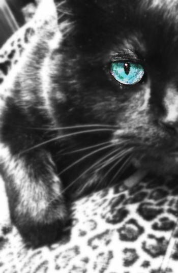 No People Close-up Pets Domestic Cat Feline Portrait Indoors  One Animal Animal Themes Pet Portraits Pet Portraits