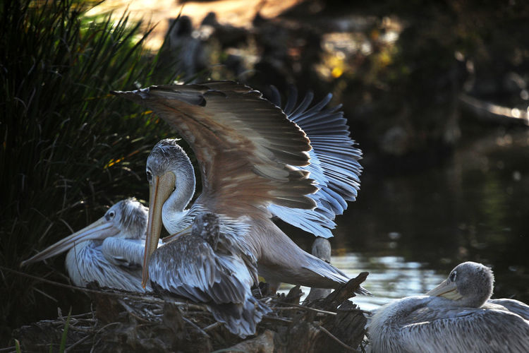 Pelicans in forest