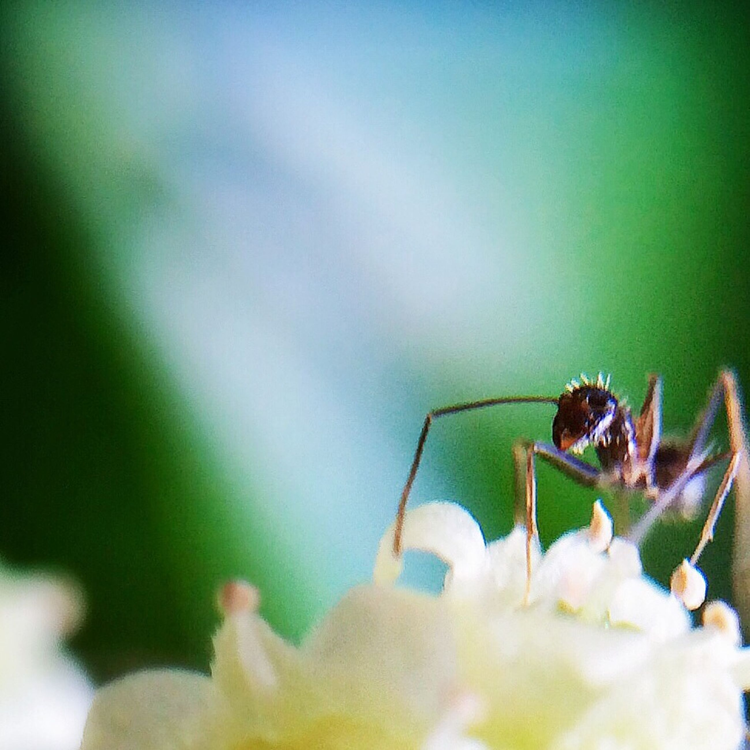 insect, animal themes, one animal, animals in the wild, wildlife, flower, close-up, selective focus, fragility, plant, nature, focus on foreground, spider, stem, growth, beauty in nature, petal, day, outdoors, no people
