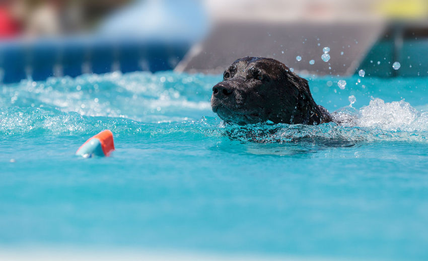 Close-up of dog swimming in pool