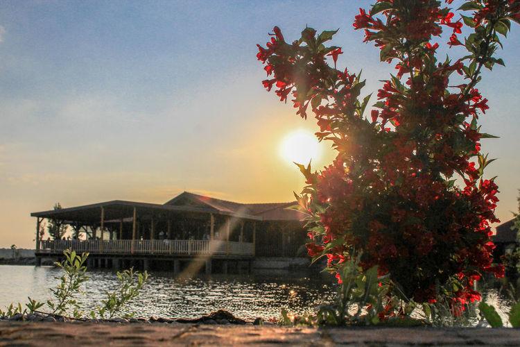 Sun & flower Sun Sunlight Flower Croatia🇵🇾 Croatian_photography Croatia ❤ Croatiafulloflife Croatia ♡ Croatia Lake Lake Restaurant Water Tree Sunset Sky Architecture Building Exterior Built Structure Idyllic Shore Lakeside