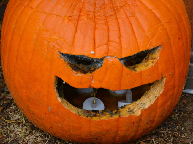 Mold Anthropomorphic Face Celebration Close-up Day Field Halloween Jack O Lantern Jack O' Lantern No People Orange Color Outdoors Pumpkin Recycling Tradition Love Yourself