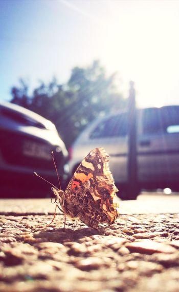 LA VISITA... Insect Buterfly Close-up No People Nature
