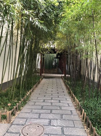 Tree Outdoors The Way Forward No People Palm Tree Day Bamboo - Plant