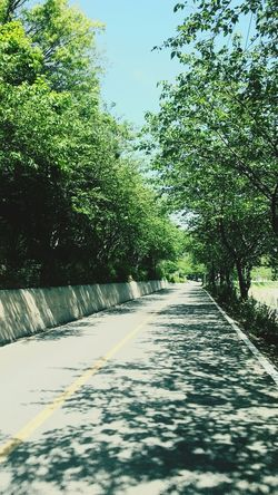 Korea Sindo Island Short Trip Nice Weather Trees On The Road Smartphonephotography