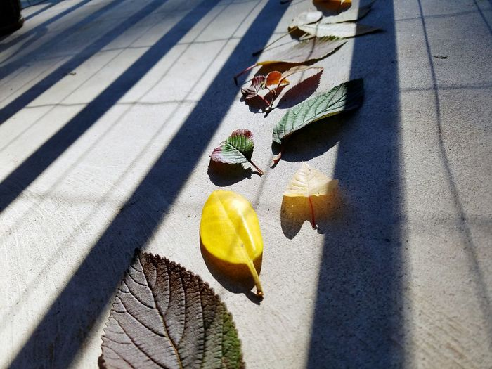 High angle view of yellow leaves on street