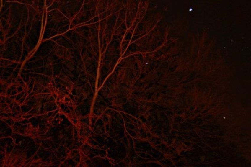 That's Me Taking Photos Hello World Belgium. Belgique. Belgie. Belgien. Etc. Astronomy Astrophoto Etoiles Astrophotographie Astrophotography Astronomy Bonjour Le Monde Anouslesetoiles Canonphotography Fabricescreve Espace Système Solaire Astrophotography Arbre Photo De Nuit Photo Nocturne