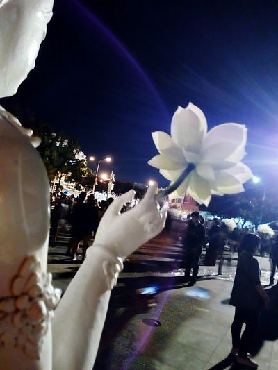 Night Night Photography Lotus Night View Flower In Hand View Collection Landscape Collection Landscape View View Photography Landscape Photography ใน Bangkok, Thailand