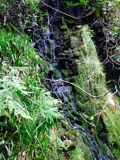 Lakedistrict Lakedistrictuk Nature Lichen