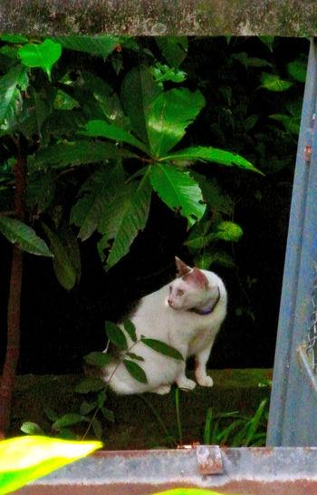 Fat cat at door