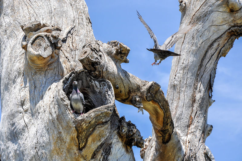 Low angle view of pigeons by tree trunk