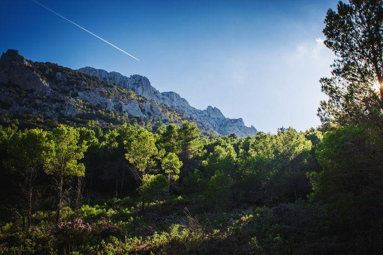 Mountain Outdoors Tree Beauty In Nature No People Landscape Nature Sky Day Planelines Dayout Tree Area Forest SPAIN Comunidad Valenciana Comunitat Valenciana