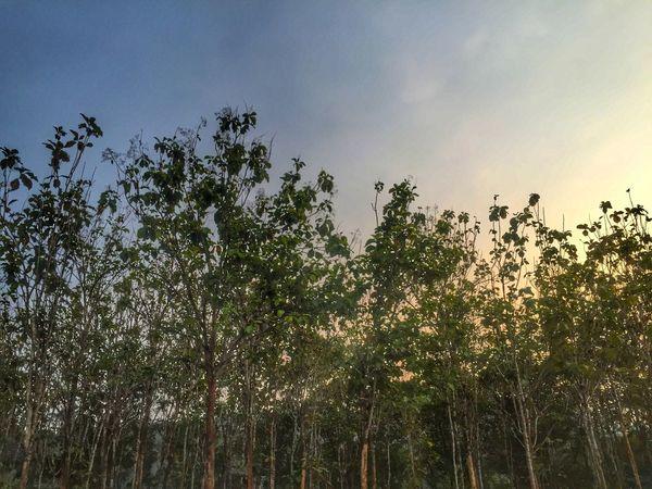 Trees Landscape Nature