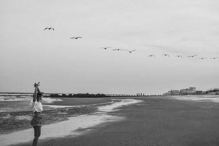 Beach Birds Blackandwhite Charleston Folly Beach Ocean Sea South Carolina