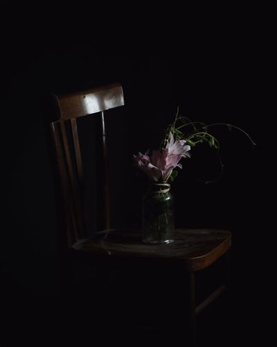 Vase Flower Table Indoors  No People Close-up Fragility Flower Head Black Background Freshness Day EyeEmNewHere