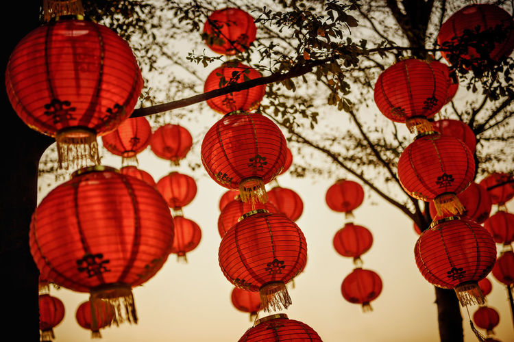 Low angle view of chinese lanterns hanging on tree
