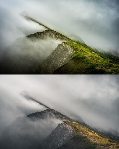 Misty Swiss