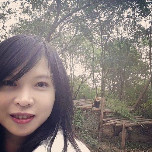 Panda Chengdu Cjima