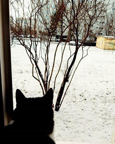 Sniegs?... ❄ Snow?... ❄ Sniegs Snow Kaķis Cat Logs Window Ara Araprieki Outside Riga Riga Latvija Latvia Dzivnieks Dzivnieki Animal Animals It's Cold Outside Manaziema