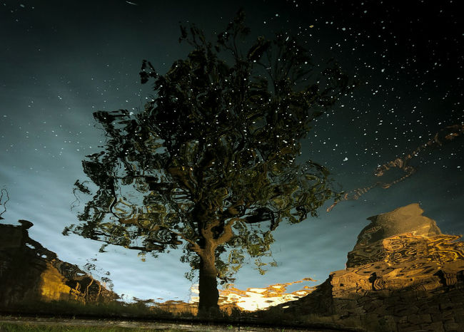 Reflection Astronomy Beauty In Nature Branch Growth Land Low Angle View Moonlight Nature Night No People Outdoors Plant Reflection_collection Reflections In The Water Scenics - Nature Sky Space Star - Space Tranquil Scene Tranquility Tree Tree Trunk Trunk The Great Outdoors - 2018 EyeEm Awards