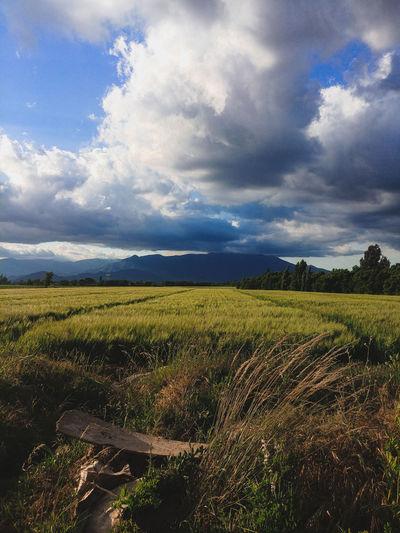 Field ❤️ Rural