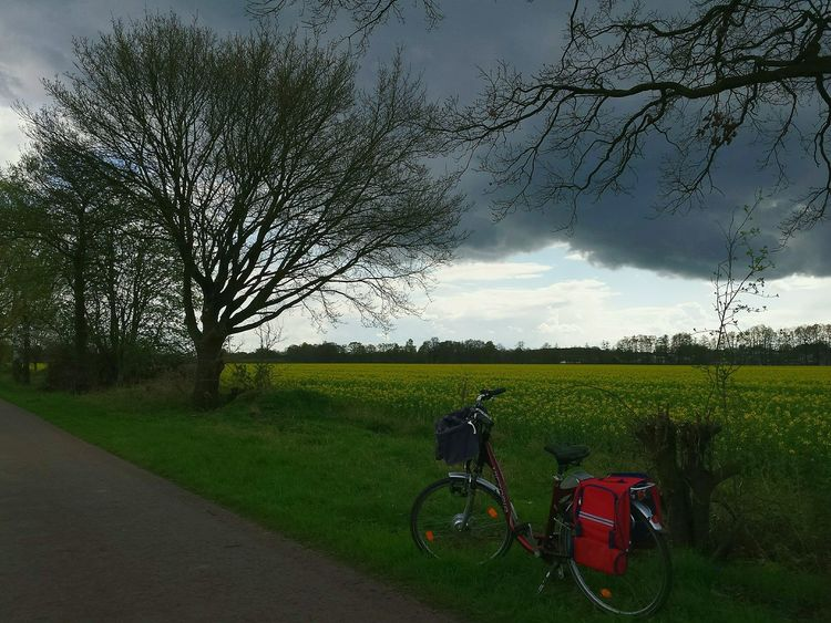 Hugging A Tree Bike Rapefield Rapefield Against Blue Sky And Dark Clouds Raps Rapsfeld Gelbe Blüten🌾 Ladyphotographerofthemonth Showcase: April Hugging Trees Dark Clouds Twigs And Branches Treebranches Red Bike Yellow Green Red Blue Landscape Popular Photos Landscapes With WhiteWall Blühender Frühling Red Bike Against Rapefield Landscape And Blue Sky With Dark Clouds Landscape Countryside Nature Countryside Scene Red Bike Against Countryside Nature Landschaftsbilder The Great Outdoors - 2016 EyeEm Awards