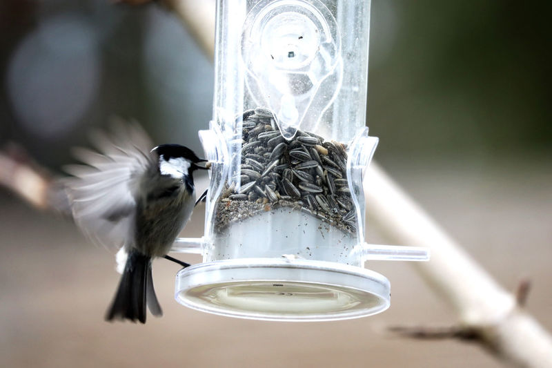Close-up of bird hovering by bird feeder
