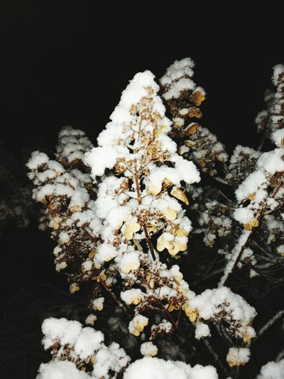 Nature Growth Tree No People Close-up Fragility Branch Beauty In Nature Outdoors Day Cold Temperature Beauty In Nature Snow Winter