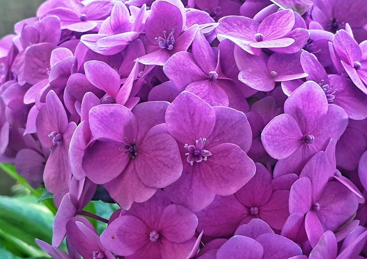 Purple flowers Plant Blooming Blossom In Bloom Plant Life Flowering Plant