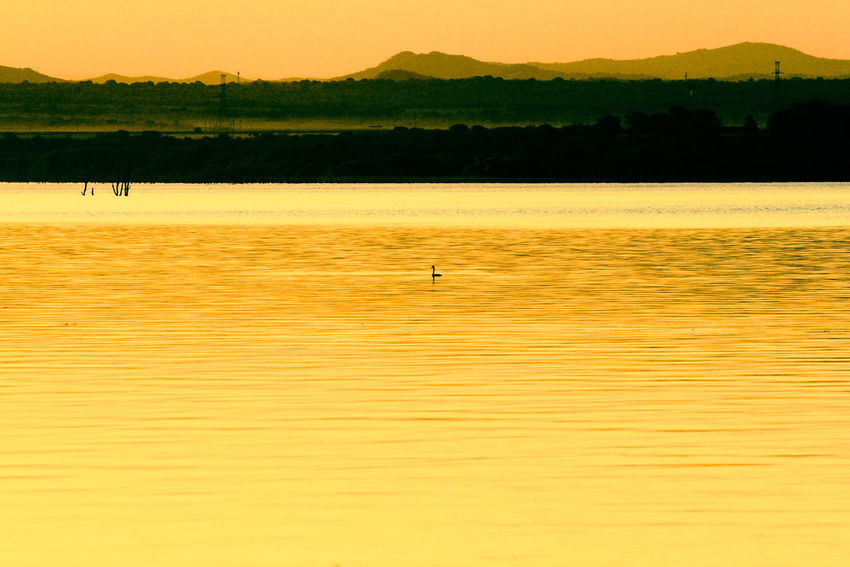 Atardecer Beauty In Nature Calido Day Duck Lago Landscape Nature No People Outdoors Pato Pato Pato Pato Cuak Scenics Silhouette Sky Sunset Tranquil Scene Tranquility Water
