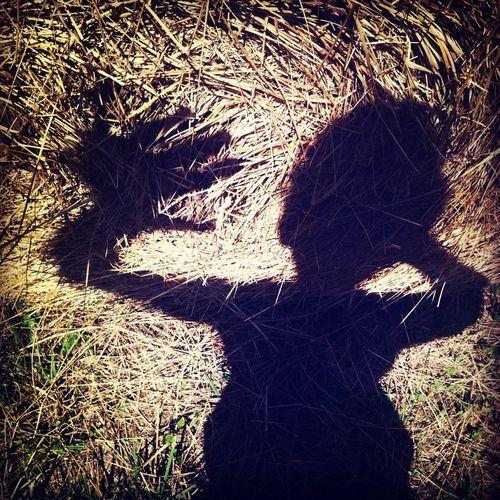 et phone home Shadow Selfportrait Hay Alien