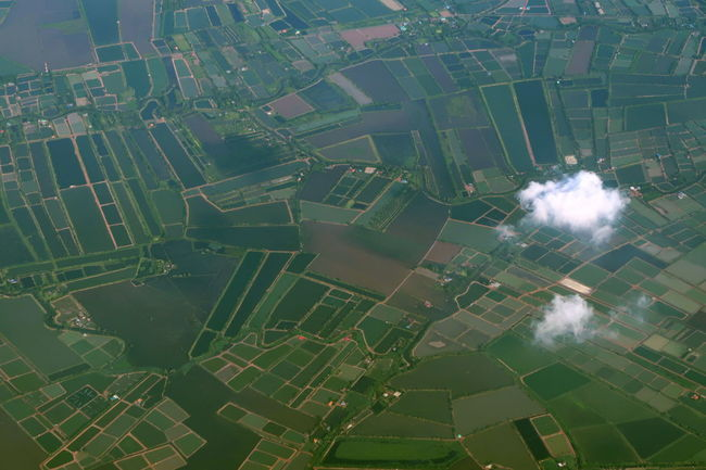 From Above  Aerial View Agriculture Clouds Field From An Airplane Window Green Color Land Landscape Outdoors Over The Clouds Paddy Field Patchwork Landscape Rice Field Rural Scene Scenics - Nature Sky