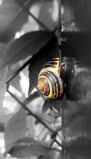 From the life of a snail EyeEm Best Shots - Nature EyeEm Wood Day Snail Shell Close Up Gastropods Close Up Snail Leafs Trees Garden Nature Climbing Close-up EyeEmNewHere Slug Slow Closed Animal Shell Crawling Wildlife