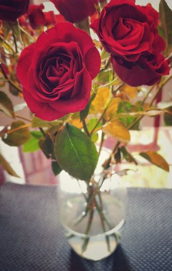 Flower Rose - Flower Nature Petal Plant Vase Beauty In Nature Indoors  Water Close-up No People Roses🌹 For MM