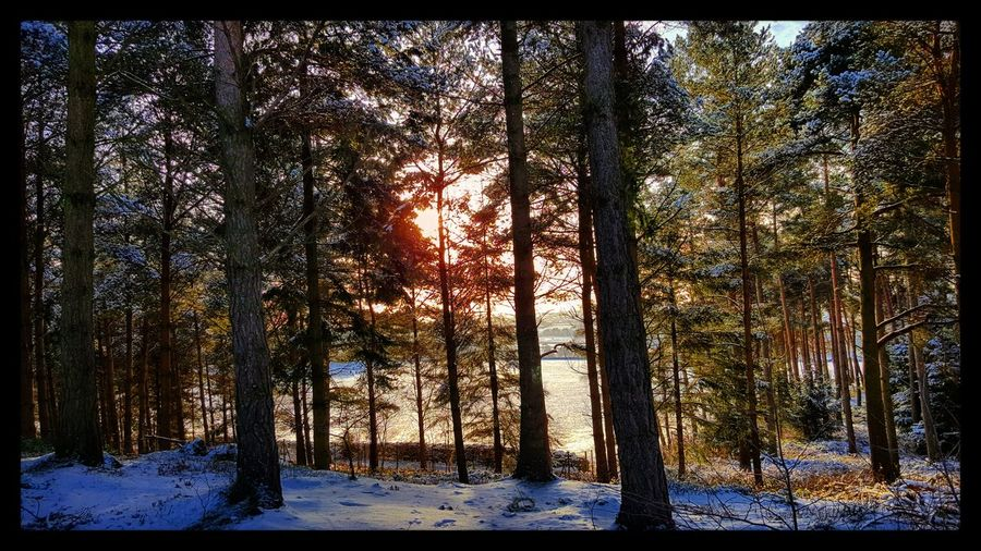 Center Parcs Forest WoodLand Penrith Whinefell Uk England North Winter Trees Landscape Scenery Scenery Shots
