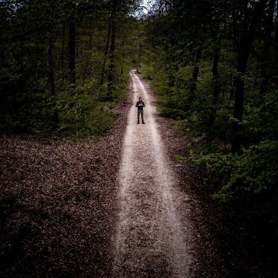 High Angle View Of Man Standing On Footpath Amidst Trees In Forest