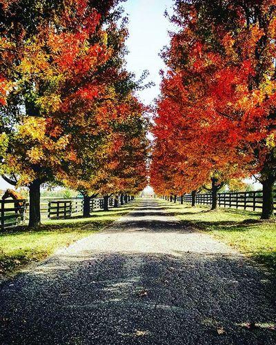 The roads of RamseyFarm Autumn Selfie Fallingleaves Farms Amercanroads Autumnleaves Fall Selfies Kentucky  Farmlife Horsefarm Farm American Thoroughbredracing Thoroughbredhorse
