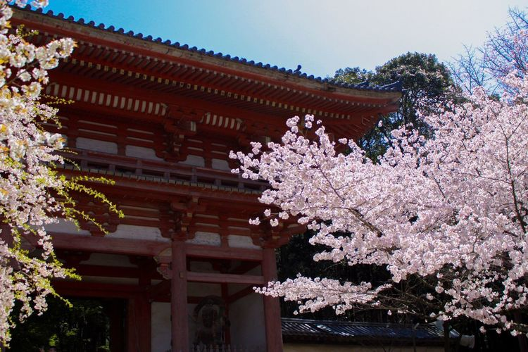Temple Kyoto Solotraveler Architecture Plant Built Structure Tree Building Exterior Building Nature Cherry Blossom Springtime Sky Outdoors No People
