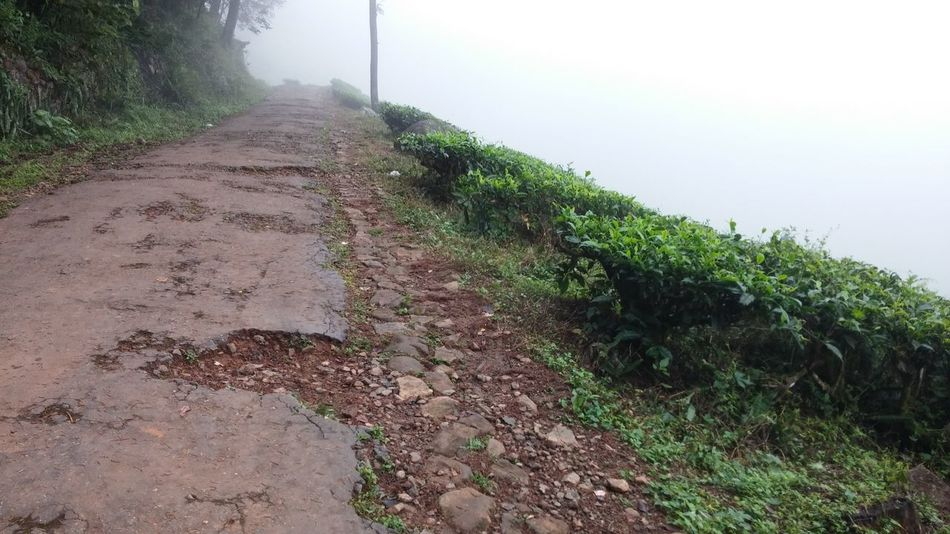 A bad road with many potholes Chembrapeak Coffee Garden Coffee Plantations Forest Green High Angle View Nature No People On The Road Outdoors Potholes Potholes Road Waynad Waynad Kerala