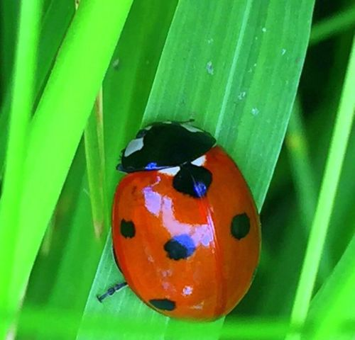 Green Color Animal Themes One Animal Nature Close-up No People Insect Animals In The Wild Outdoors Day Ladybug Ladybirds Ladybird Ladybugs Critter Bug