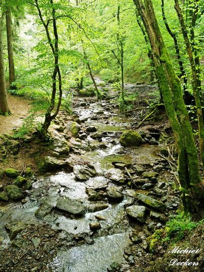 Belgium Ardennes Stream Downstream Rocks Trees Forest Water Nature Walkingroute
