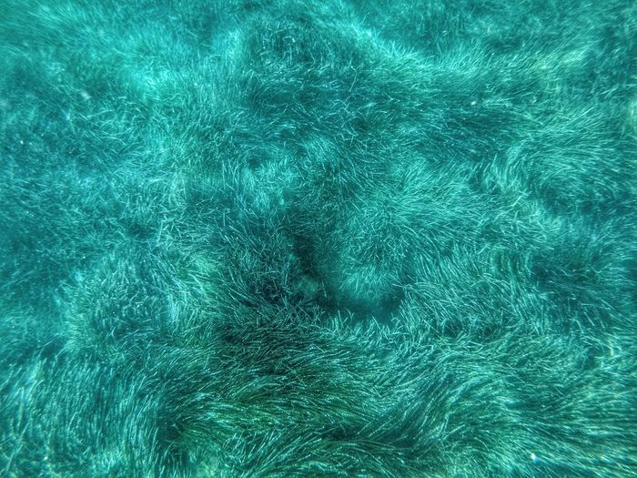 Algues, fond marin. Snokerling Water Swimming Pool UnderSea Backgrounds Full Frame Directly Above Textured  High Angle View Close-up Green Color Turquoise Colored