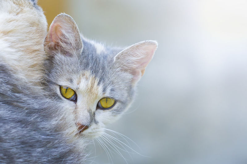 Animal Themes Cat Close-up Day Domestic Animals Domestic Cat Feline Focus On Foreground Looking At Camera Mammal No People One Animal Outdoors Pets Portrait Sun